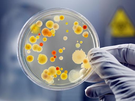 Cách để thu được số lượng vi sinh vật tối đa thì nên dừng ở pha nào