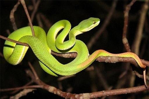 Ngủ và mơ thấy rắn đang cắn người khác
