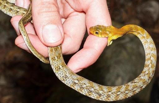 Mơ thấy rắn cắn đánh đề con gì?