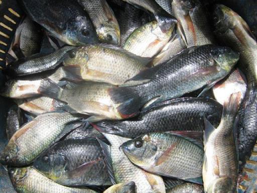 Giải mã ỹ nghĩa giấc mơ bắt được nhiều cá
