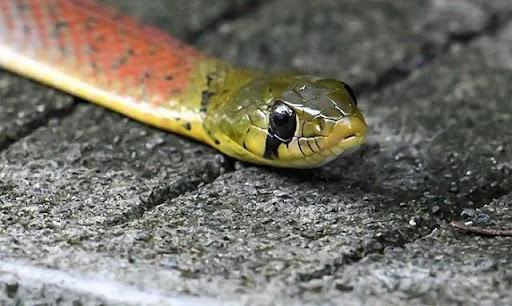 Mơ thấy chính bản thân bị rắn cắn