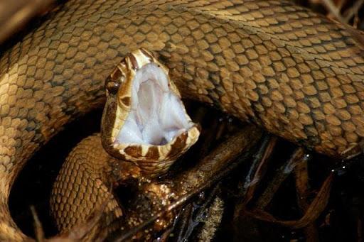 Mơ thấy rắn cắn nên đánh đề số gì?